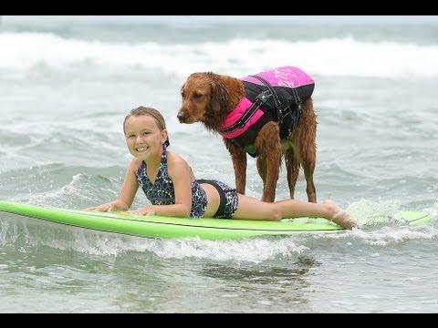 Xxx Mp4 Surf Dog Ricochet Surfs With A Six Pack Of Kids 3gp Sex