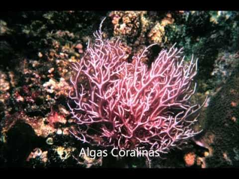 arrecifes coralinos
