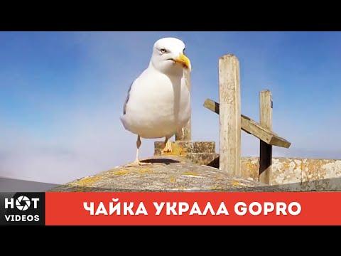 Xxx Mp4 Чайка украла GoPro чтобы записать свой полет HOT VIDEOS Смотреть видео HD 3gp Sex