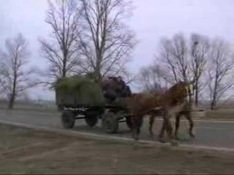 Miś flejowaty koń a raczej szkapa ;