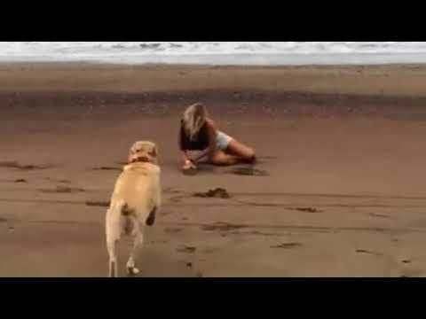 Girl Fails Backflip then Gets Tackled by Dog