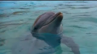 Talking to Dolphins   Animal Superpowers