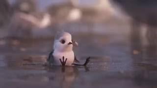 PIPER (Disney Pixar) Short Animation CORTO ANIMADO Teaser   2016