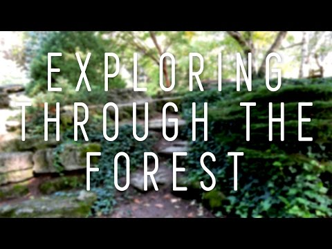 EXPLORING THROUGH THE FOREST | Caitlin Reyes