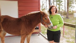 How to take care of a horse so it's nice to ride.