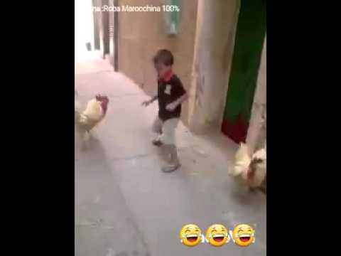 Boy and hen fight