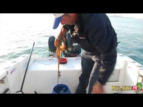 Tecnica di pesca al polpo 2di2