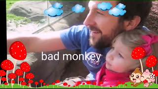 World top 5 most funny monkey videos -2016 wild & intelligent monkey