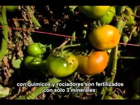 El Milagro Gerson The Gerson Miracle completo y en español sub