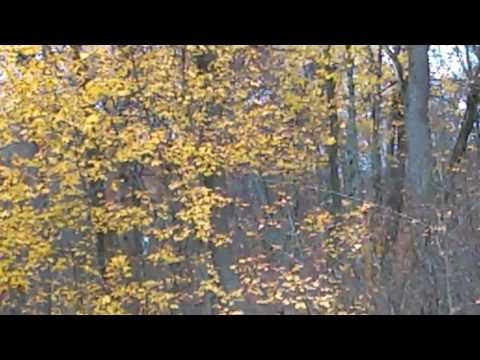 WTF video!! B.f's in tree then Keep your eye on the cloaked brown leaves!!