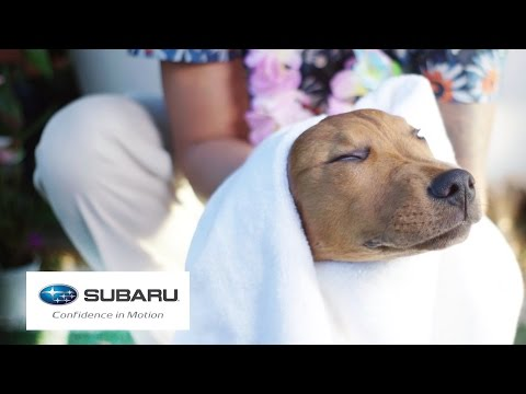 Dogs Visit A Spa For The First Time // Presented By BuzzFeed & Subaru