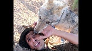 اشتياق الذئب لصاحبه شيء عجيب بعد الفراق /محمد الدرويش