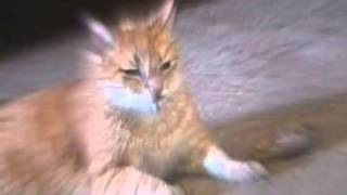 What REALLY Happens to Cats on Catnip.flv