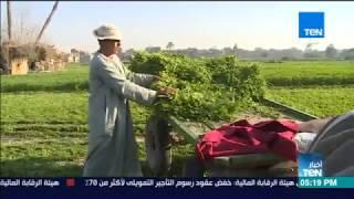 أخبار TeN - وزير الزراعة يؤكد على أولوية الأمن الغذائي ببرنامج الحكومة