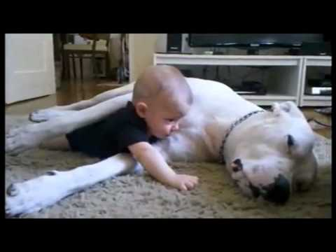 the best Cuddle Dog And Baby HD