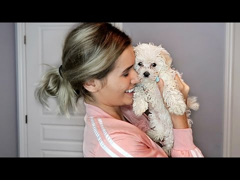 SURPRISING GIRLFRIEND WITH A PUPPY EXTREMELY CUTE