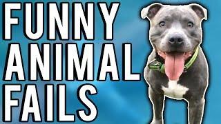 Funny Animal Fails May 2017 | A Fail Compilation by FailUnited
