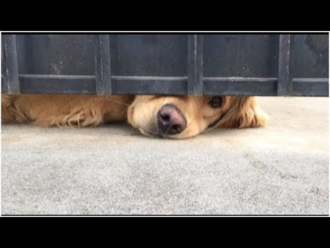 Xxx Mp4 This Dog Waits For His Girl After School Every Day 3gp Sex