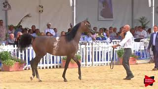 N.107 MAHER AL SAYED - Menton 2018 - Yearling Colts (Class 6B)