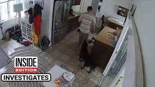Friendly Dog Wags Its Tail as Burglar Prowls Around Home