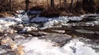 Frozen Flood Puppy!