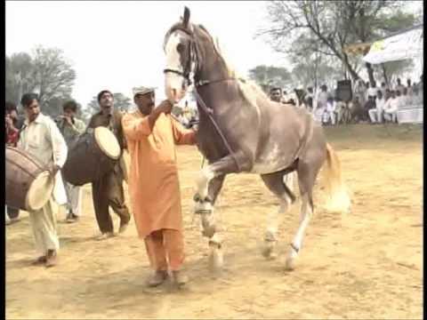 Sher Dil dancing at Dadyal horse dance mela