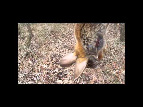 Swamp Rabbit Hunting 2 19 2011 Part One