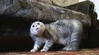 AlterNateCatUniverse Cat saying 'OH NO NO NO'  quite normal