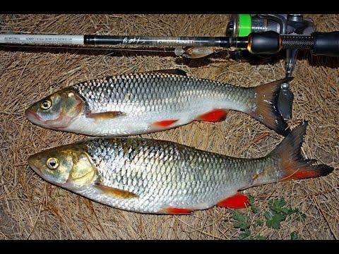 видео рыбалка на сейму