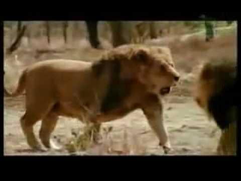 Tập tính của động vật