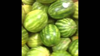 Best Watermelon Vines Compilation