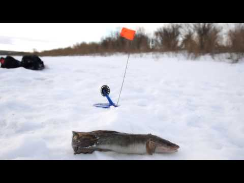 ловля окуня в свердловской области видео