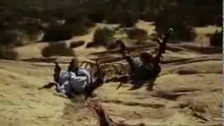 Camel Spiders (Верблюжьи пауки) (Krwiożercze Pająki) (Jim Wynorski, EEUU, 2011) - TV Spot