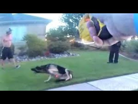 Bodycam Shows Utah Cop Use Taser on Attacking Dog
