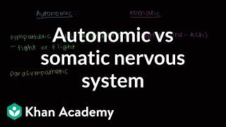 Autonomic vs somatic nervous system | Muscular-skeletal system physiology | NCLEX-RN | Khan Academy
