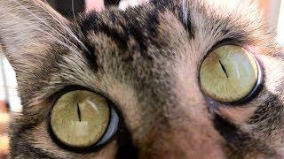 【猫さんを超接写2】ローアングルで猫さんに迫る