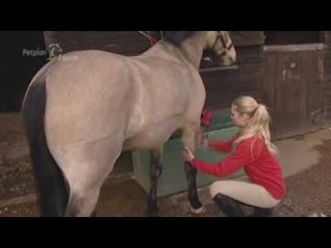 Xxx Mp4 Grooming Your Horse By Yourstables Co Uk 3gp Sex
