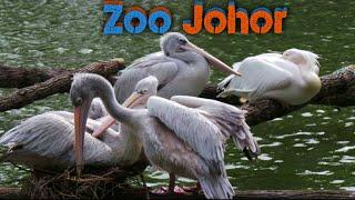 JOM!!! Lihat Haiwan Di Zoo Johor Part 1