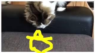 KatzenDetektiv Rocco #Leiche im Bett