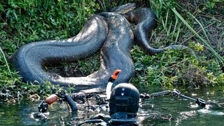 Diver Discovers Giant Anaconda