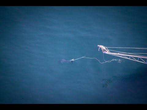 Harpooning a Giant Bluefin Tuna