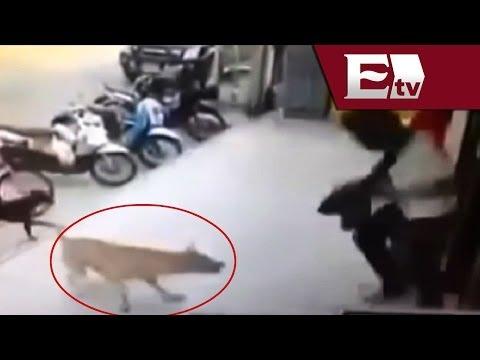 VIDEO Venganza de perro maltratado Titulares con Vianey Esquinca