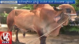 Work Shop On Indigenous Cattle Breeding Policy In India | Hyderabad | V6 News