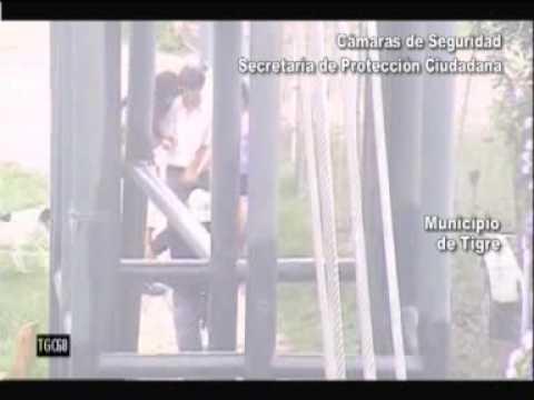 TIGRE LAS CAMARAS DE SEGURIDAD ATRAPARON A JOVEN DESCONTROLADO POR EL ALCOHOL