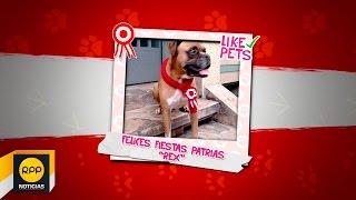 LIKE PETS │ Mascotas Patriotas