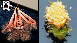 Bizarre Discoveries Proving Nature Is Full Of Surprises