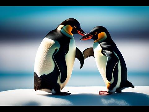 JOGED PINGUIN ASLI | PINGUIN BERGOYANG | Senam penguin video asli