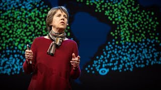 The tiny creature that secretly powers the planet | Penny Chisholm