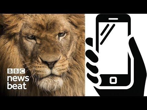 Tinder: Why we act like animals | BBC Newsbeat
