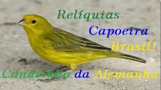 Musica Antiga de Capoeira-Canarinho da Alemanha